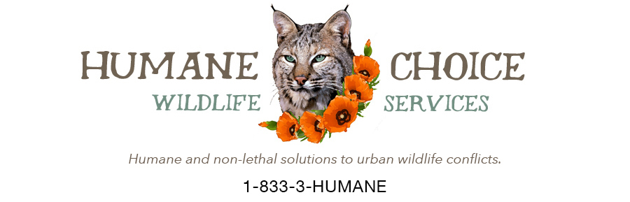 Humane Choice Wildlife Services